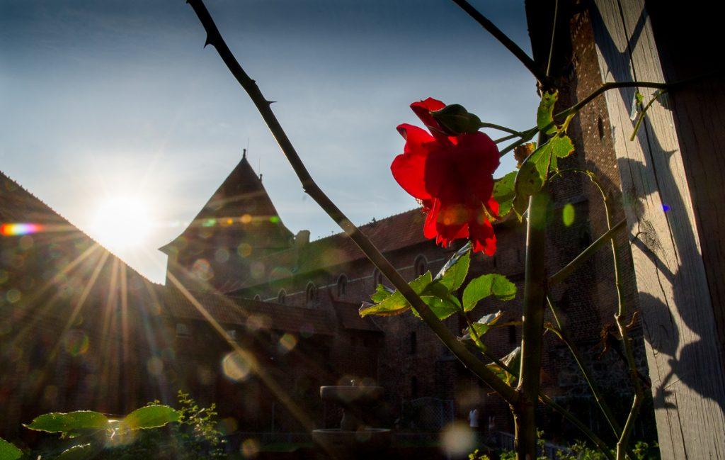 Ogród krzyżacki na zamku w Malborku
