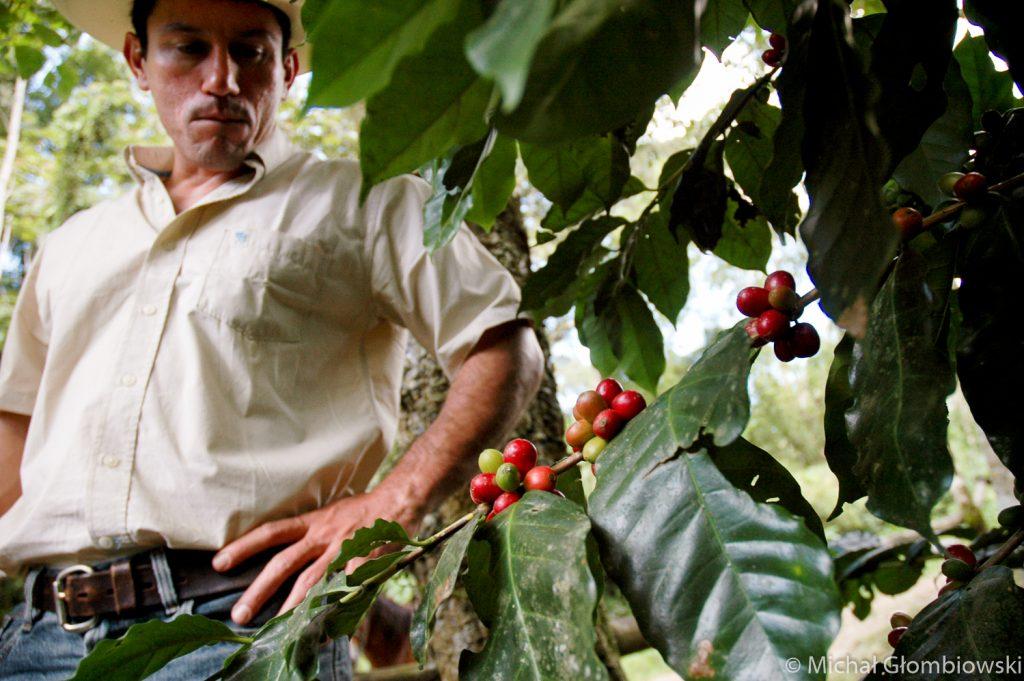 Honduras - plantacja kawy - ISO 320; 1/125 sek.; f/4.5; 18 mm (dla matrycy DX)
